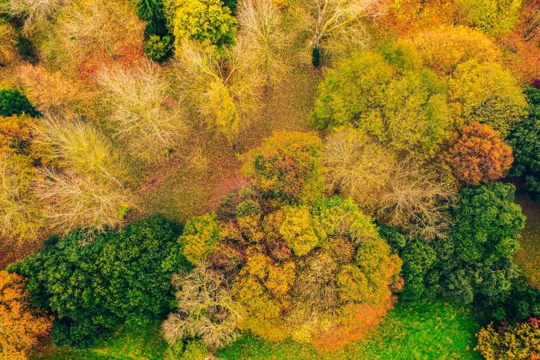 Autumnal trees photographed from above